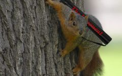 Exponent begins new squirrel delivery service