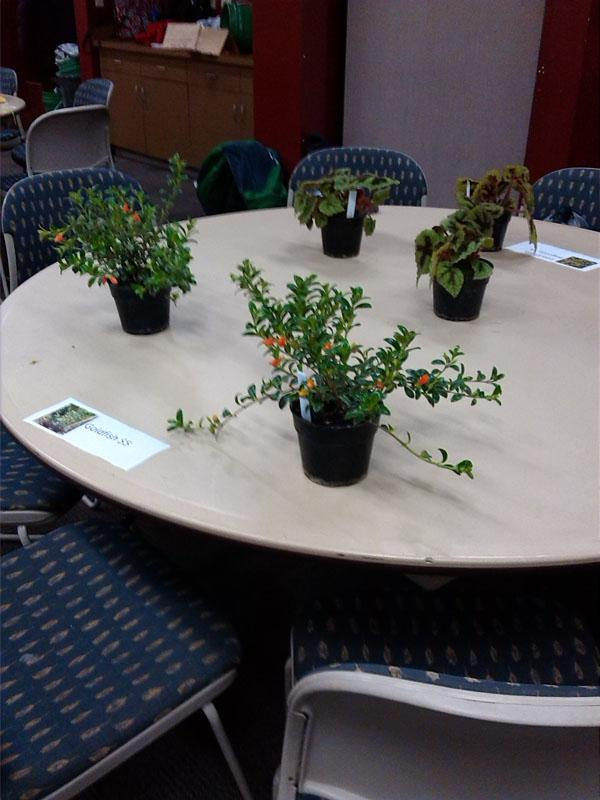 Horticulture Club members sell plants to offset costs for conventions. The plants sold anywhere from $2-5.