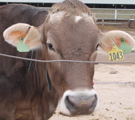 Pioneer Farm modernizes technology