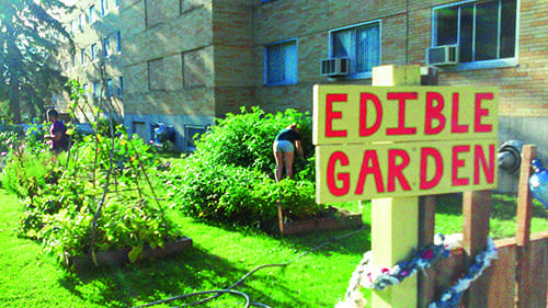 The Edible Garden is located between McGregor and Royce Hall and is mostly student run.