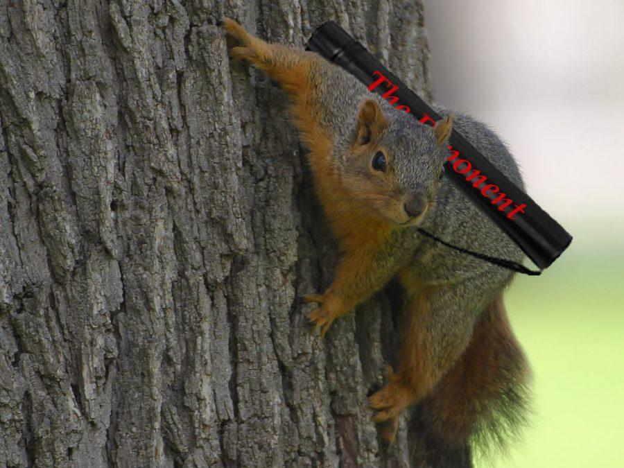 Who run the worlds? SQUIRRELS!