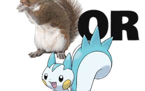 Squirrels? Pokémon??