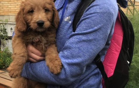 Green Campus Project brings puppies to play