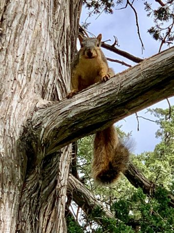 Student's disappearence linked to local squirrels