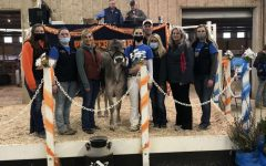 38the Annual Pioneer Dairy Classic Cattle Sale